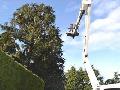 servizio di potatura alberi
